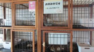 猫カフェ「キューリグ天神店」その2
