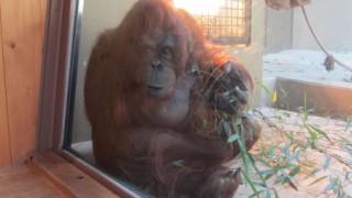 福岡市動物園・植物園に行ってきた