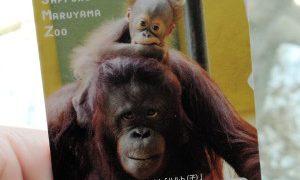 円山動物園の年間パスポートを入手